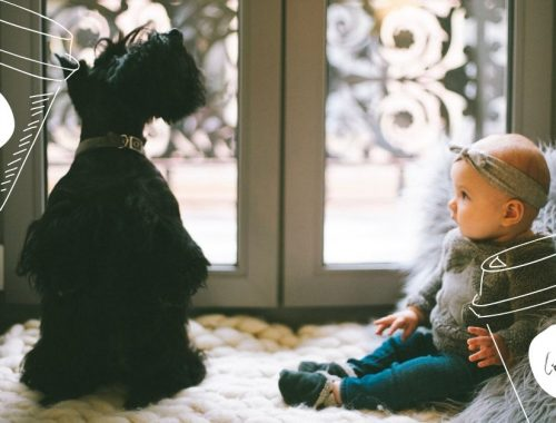 how to introduce your new baby to your dog