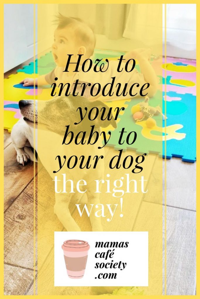pin how to introduce your baby to your dog the right way
