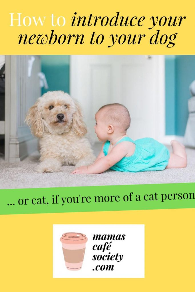 pin how to introduce your newborn to your dog or cat