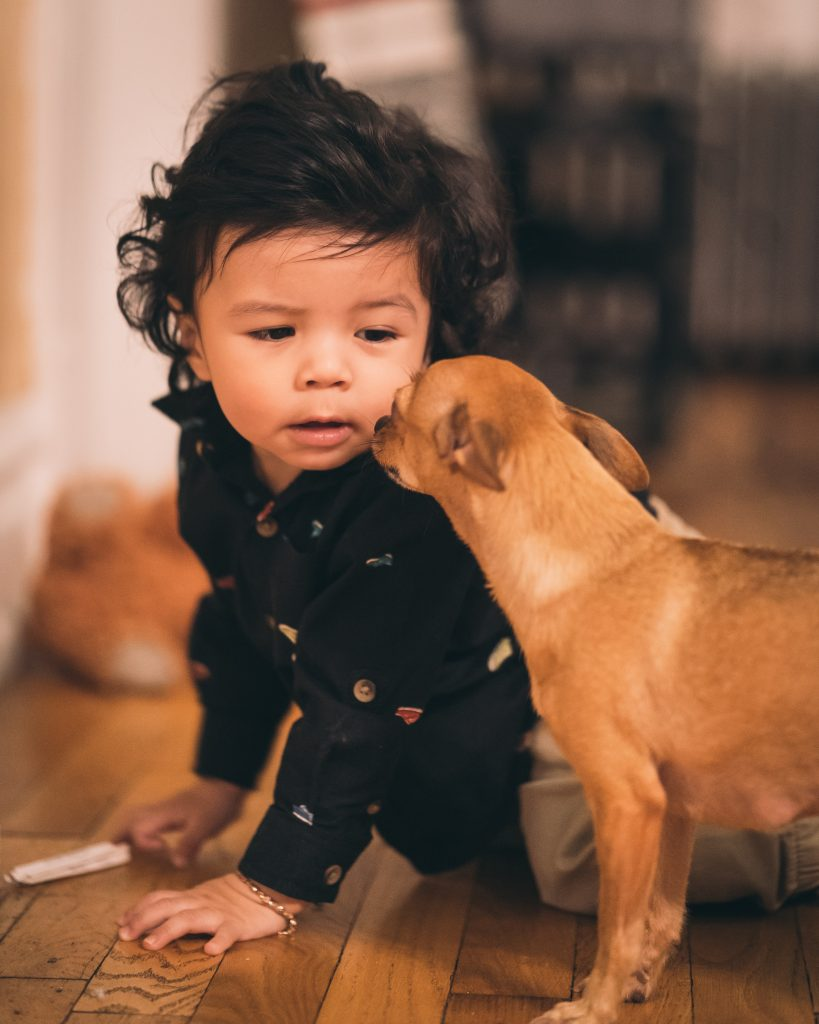 socialize your dog around other babies